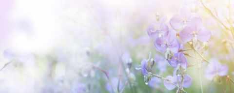 Bloemen - Funeralis